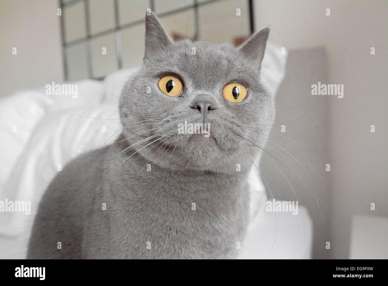 Cat looking at something - Stock Image