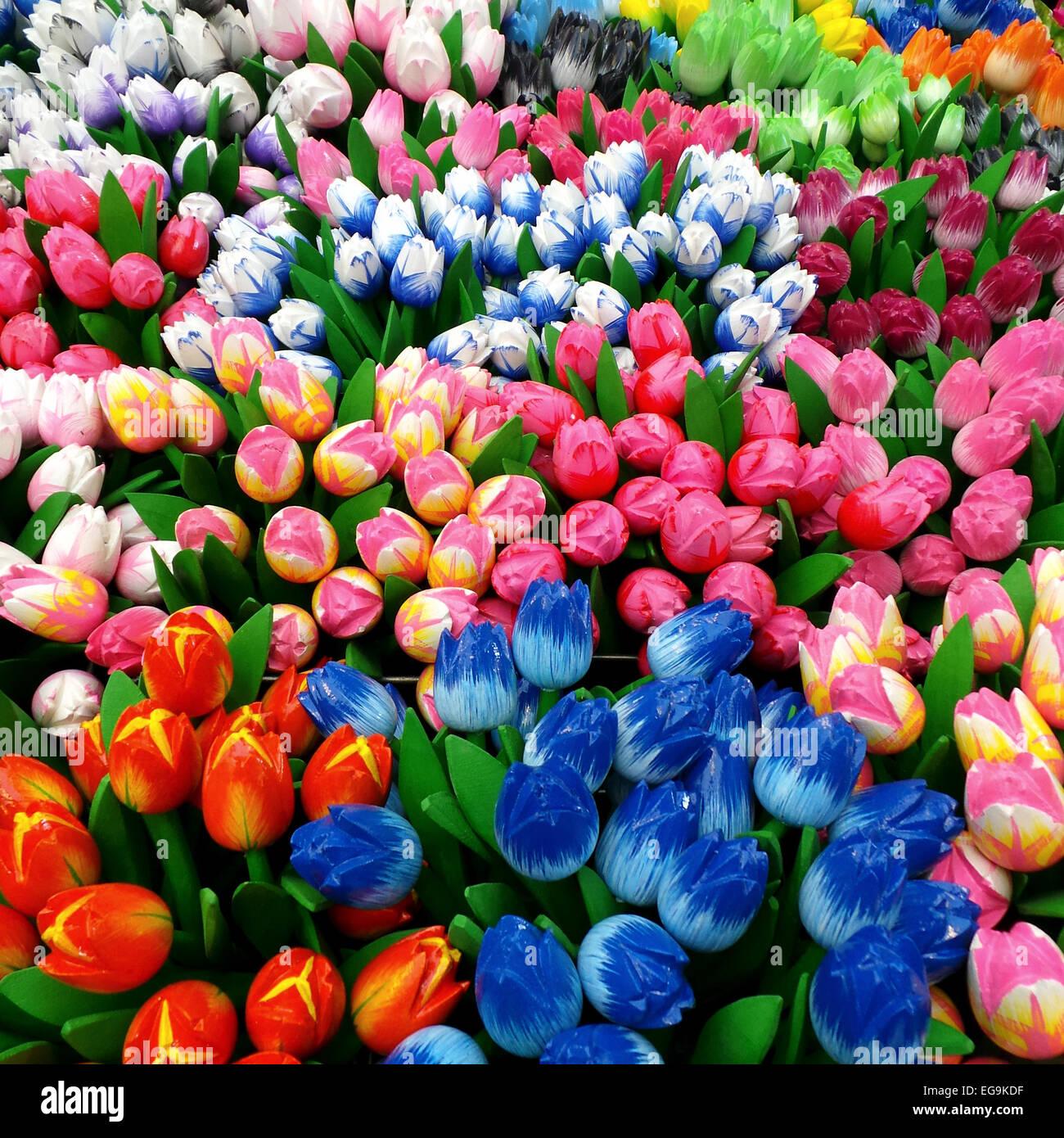 Multi colored tulips - Stock Image