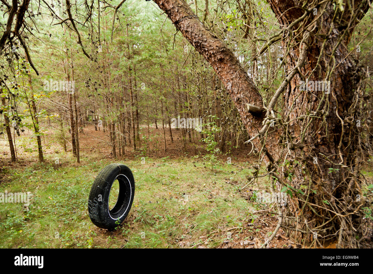 Tyre swing in an abandoned garden Stock Photo: 78893448 - Alamy