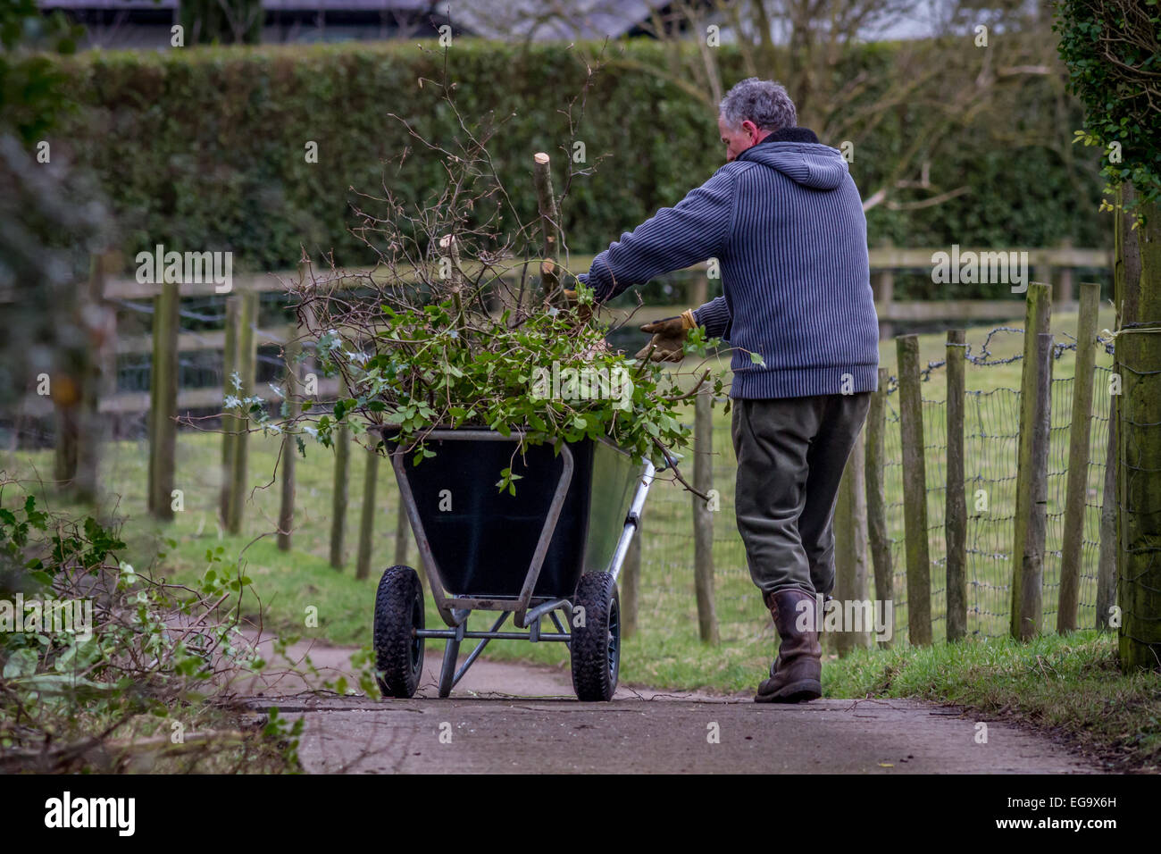 Man gardening using wheelbarrow to collect clippings in winter/spring - Stock Image