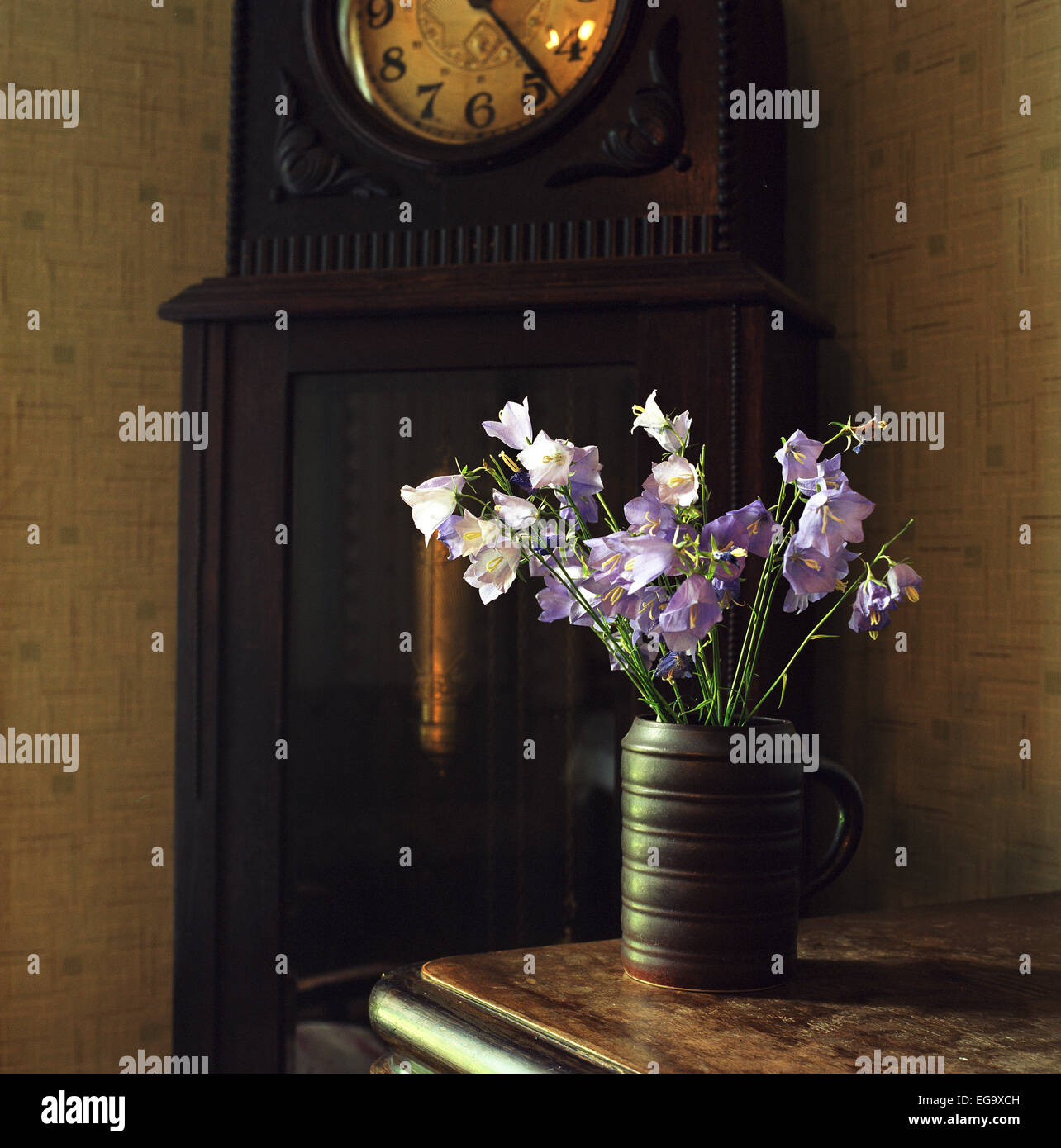 Bunch of bluebells in vase on table lit by rising sun. Medium format film. - Stock Image