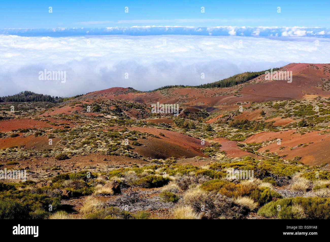 Teide National Park,  Tenerife, Canary Islands, Spain - Stock Image