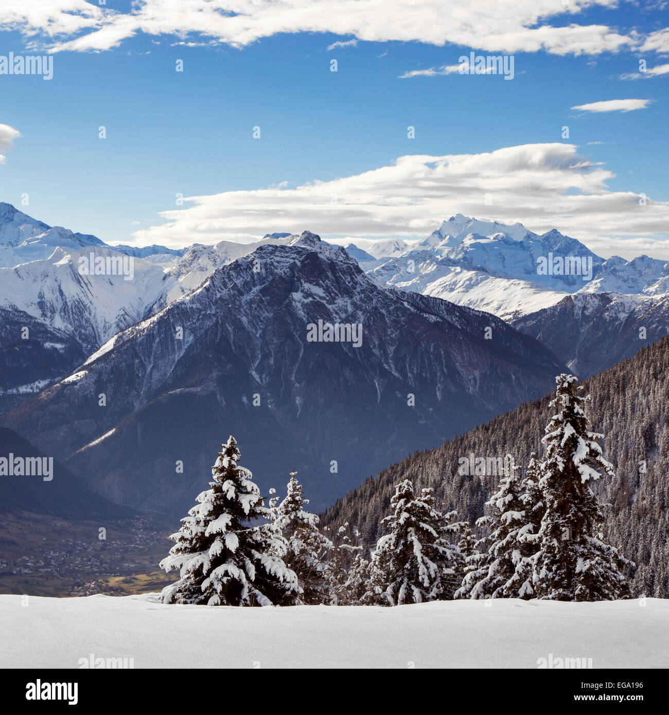 Snow covered spruce trees and Alpine mountains in winter in the Swiss Alps at Wallis / Valais, Switzerland - Stock Image