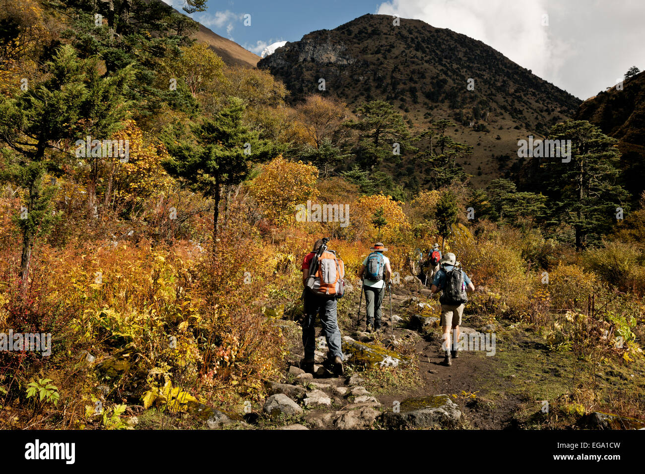BHUTAN - Trekkers following trail brightened by fall color and glimpse of the summit of Jhomolhari  on route to - Stock Image