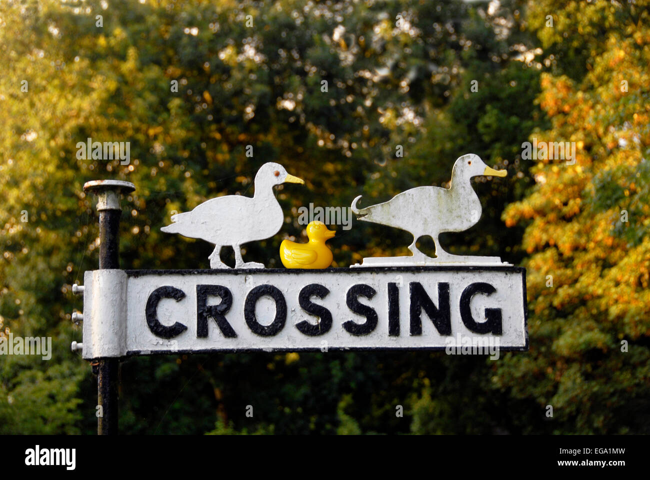 Novelty sign: Ducks Crossing - Stock Image