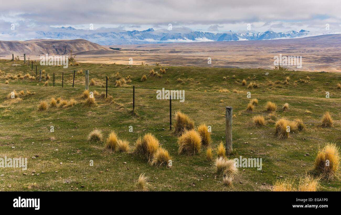 A landscape as one imagines New Zealand.. infinitely seeming fields & grass with alps in the background - Stock Image
