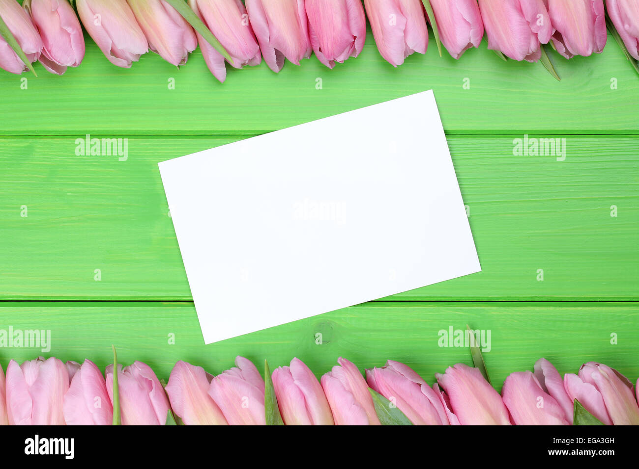 Frame from tulips flowers in spring or mothers day with greeting card and copyspace for your own text - Stock Image