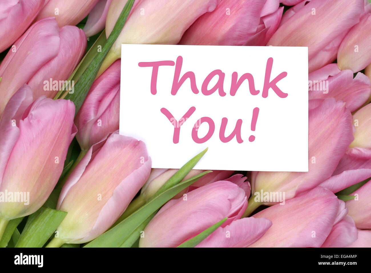 The Words Thank You On Greeting Card Gift With Tulips Flowers Stock