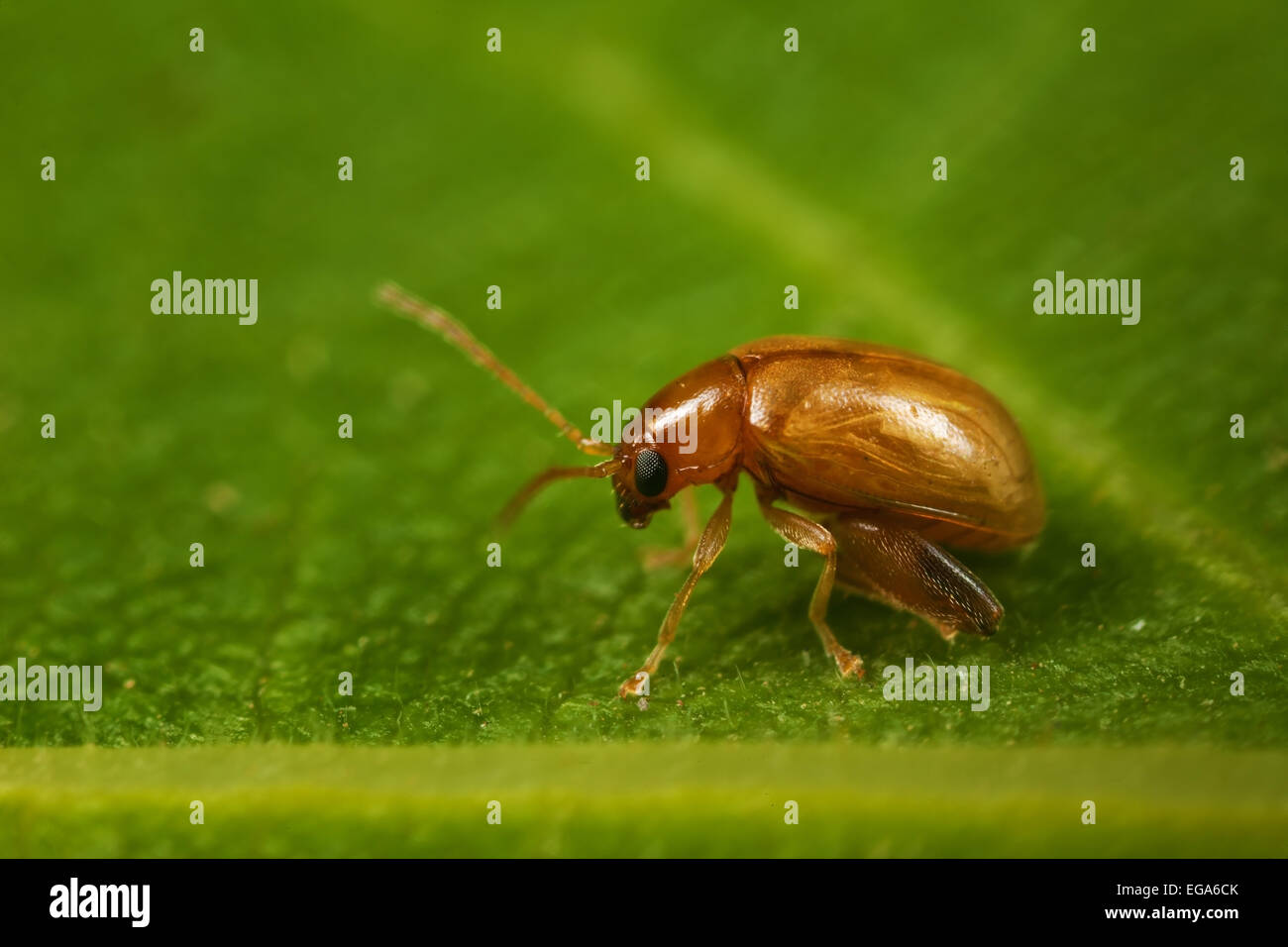 Small insect on leaf - Stock Image