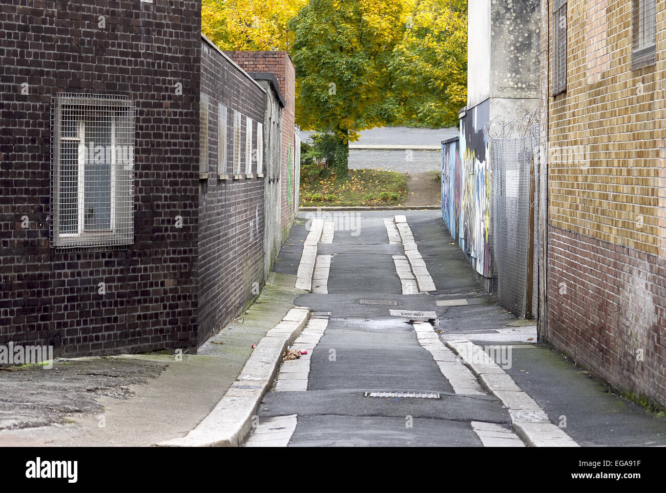 Alley,Rear View,Urban Scene,Abandoned,Absence,Unhygienic,Tree,Autumn,Window,Built Structure,Graffiti,Garbage,Architecture,city - Stock Image