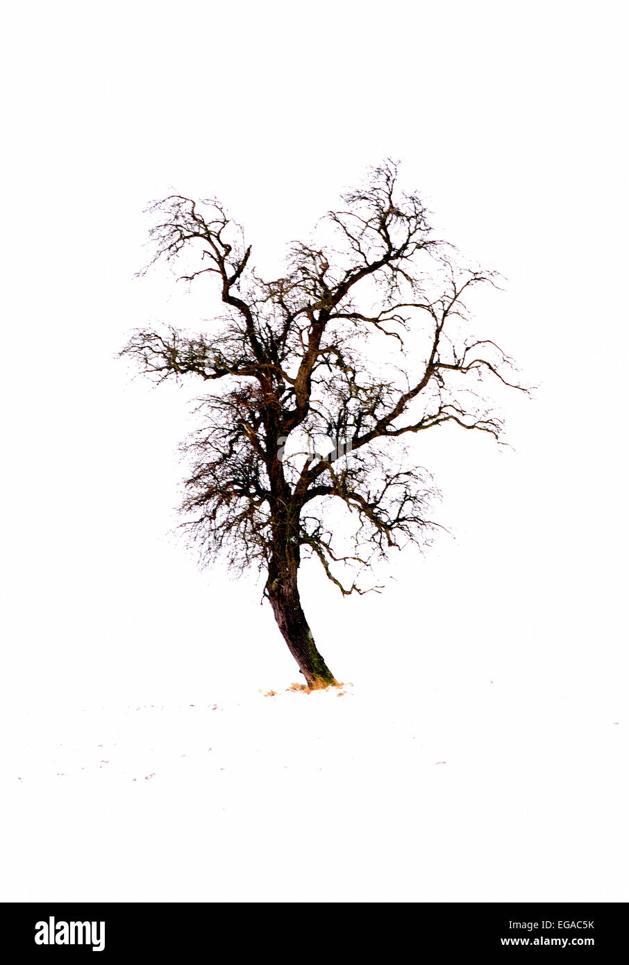 Single tree silhouetted against cloudy winter sky, Mazovia Region, Poland - Stock Image