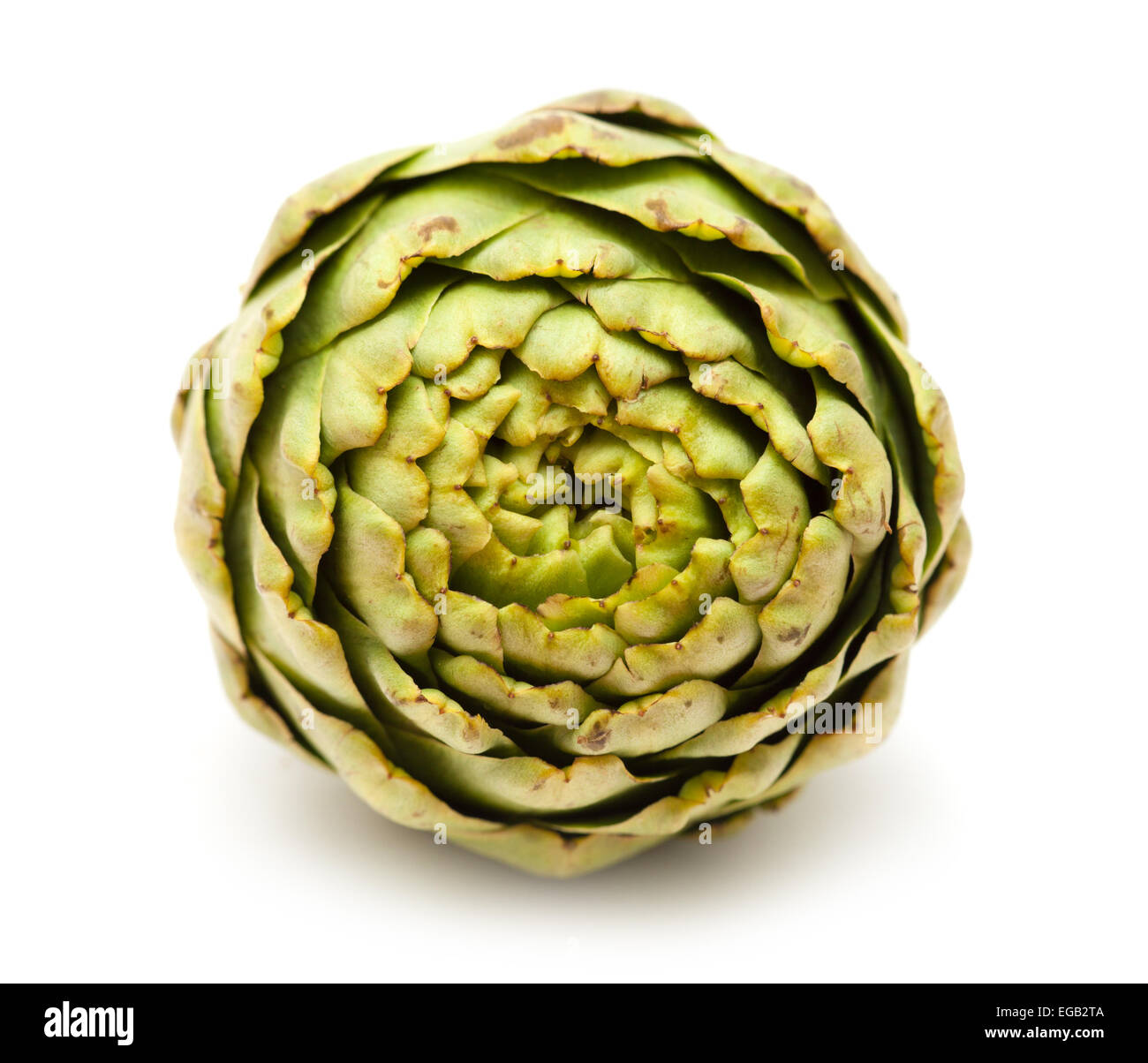 globe artichoke isolated on white background - Stock Image
