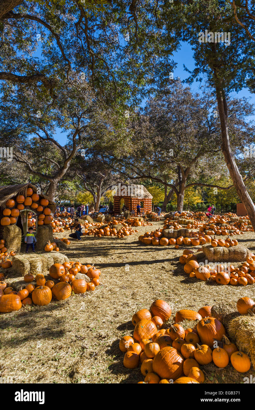 The Pumpkin Village in the fall, Dallas Arboretum and Botanical ...