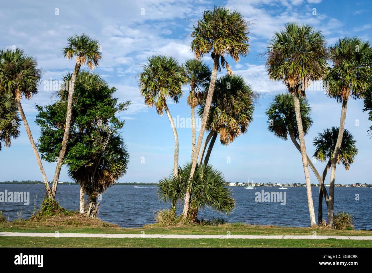 Florida Jensen Beach Indian River Lagoon Cabbage Sabal