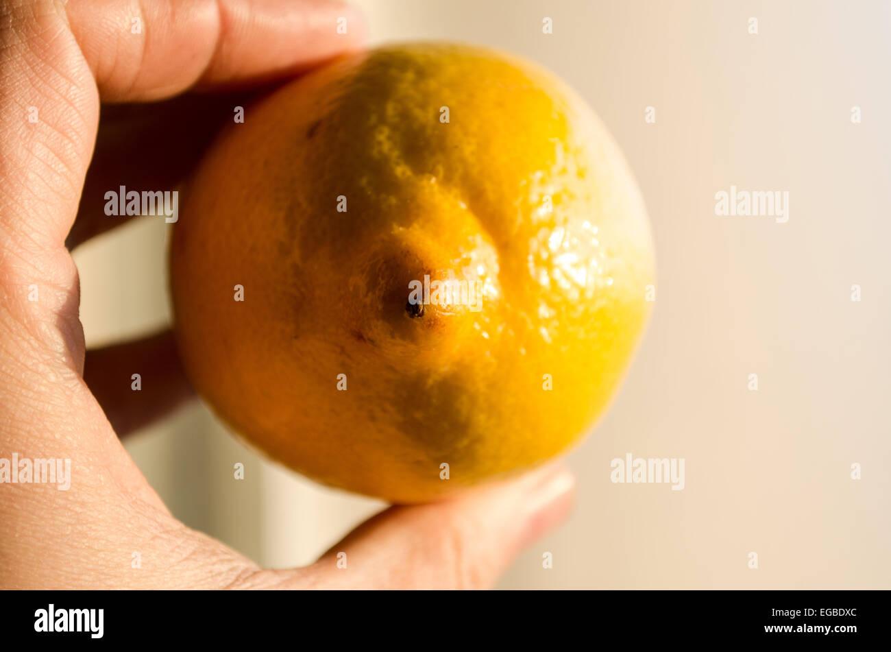 Lemon in woman hands Stock Photo