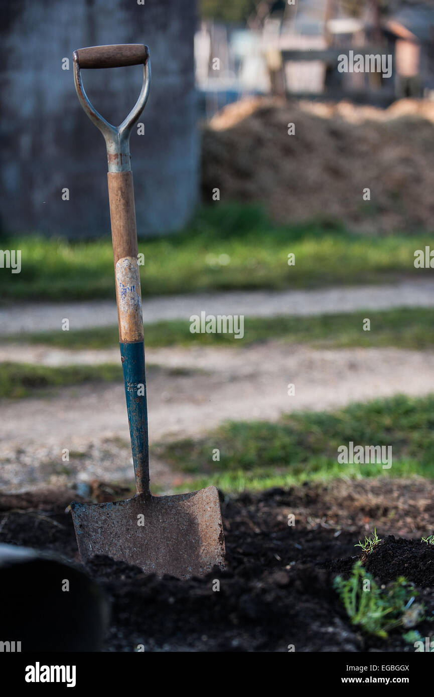 Spade stuck in the ground - Stock Image