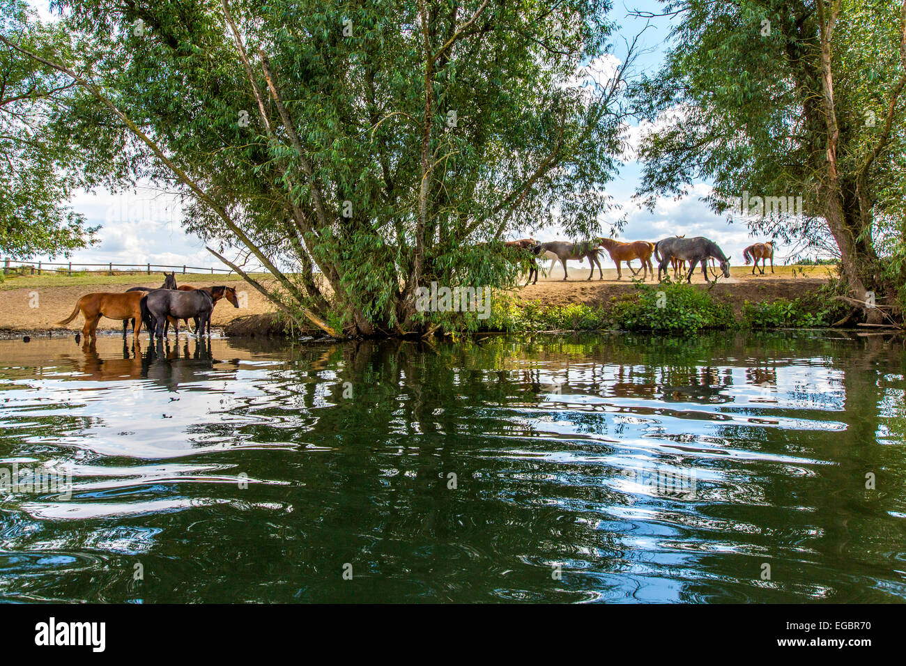 Horse pasture at river Ruhr, Schwerte, Germany - Stock Image
