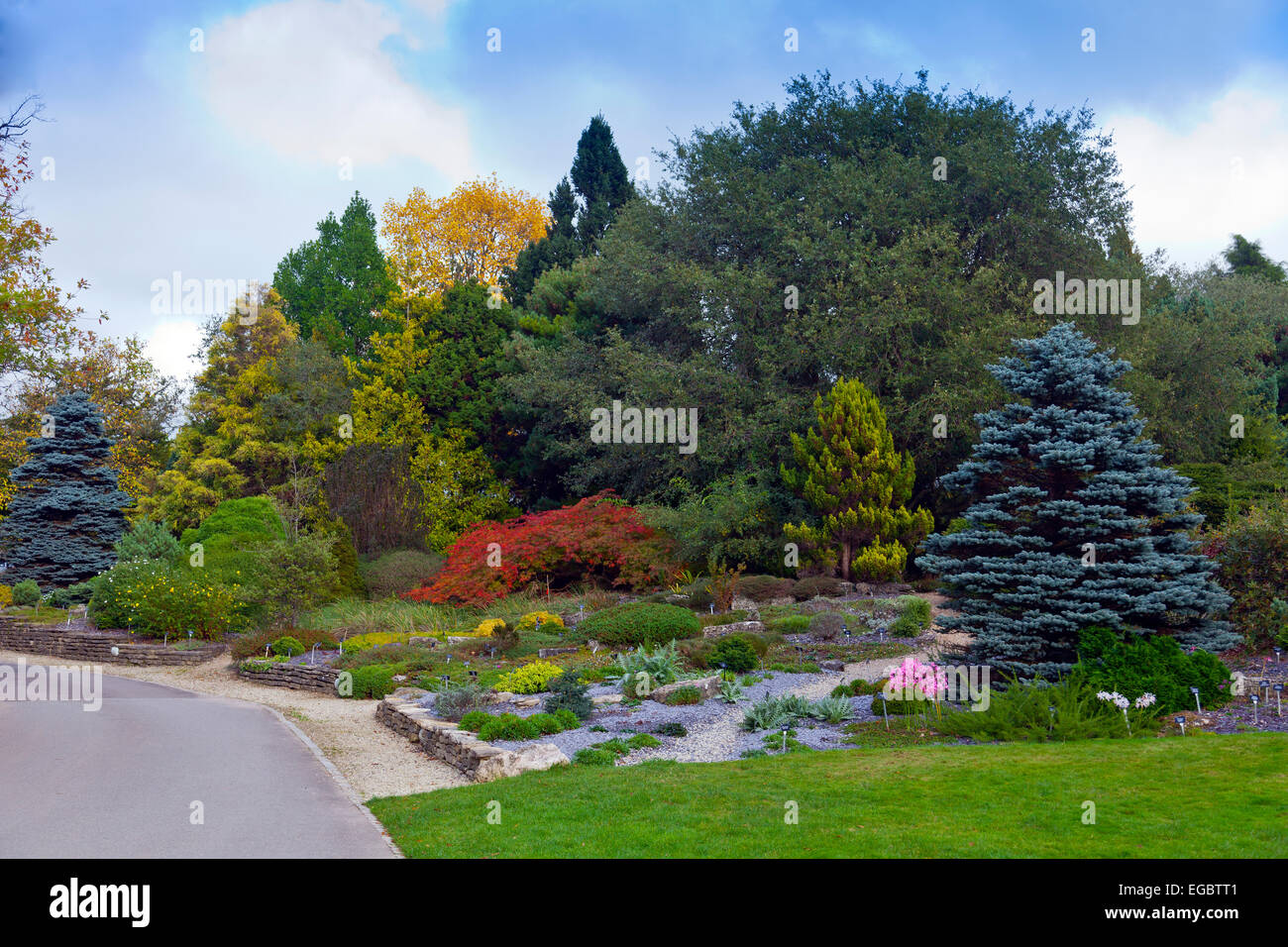 Autumn amongst the conifers at the Sir Harold Hillier Gardens, Romsey, Hampshire, England, UK - Stock Image