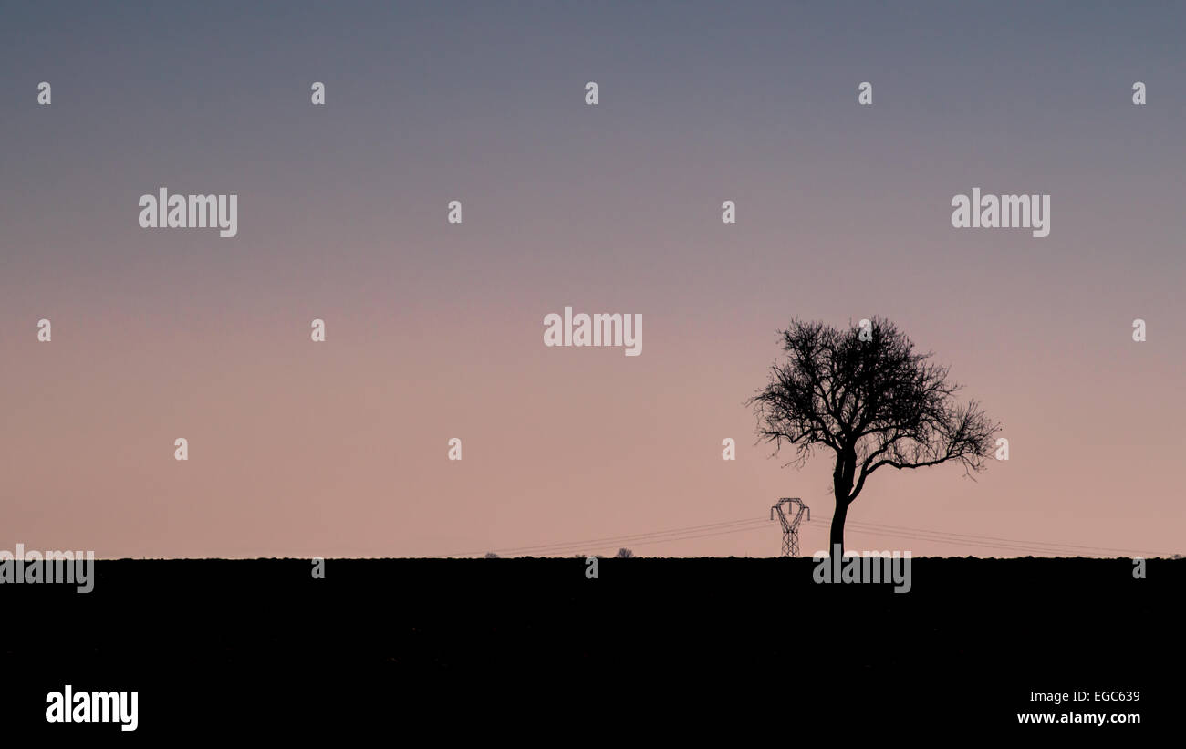 Tree, Backgrounds, Unhygienic, Retro Revival, Loneliness, Solitude, Photography, Winter, Nature, Frost, Scenics, - Stock Image