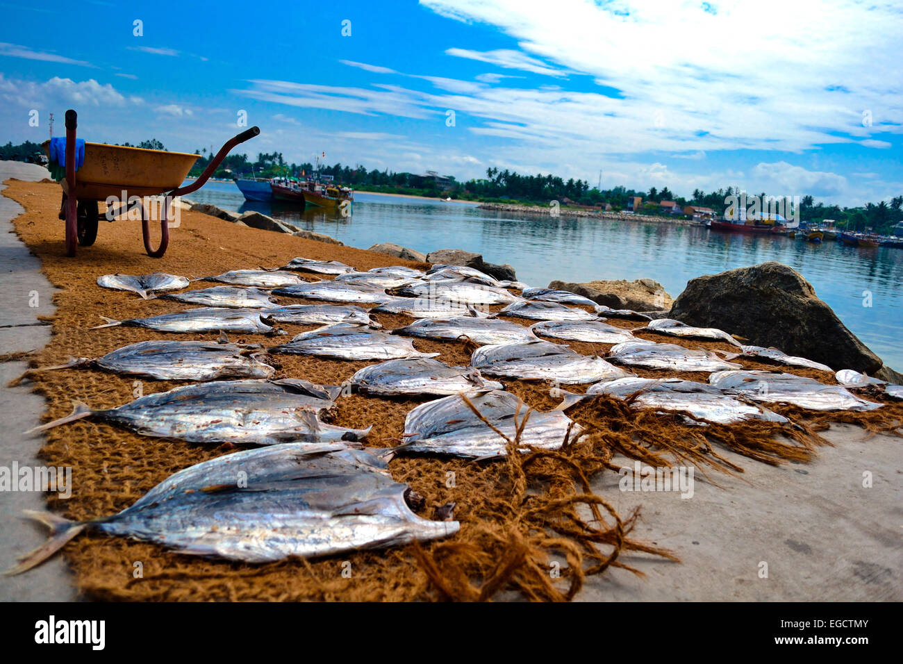Drying salted fish on the West Coast. near Beruwela. - Stock Image