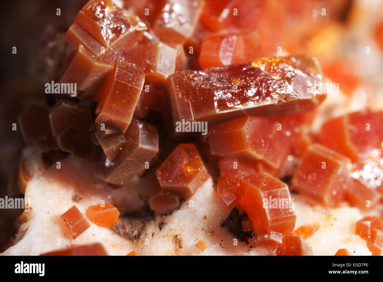 Vanadinite crystals in macrophotography - Stock Image
