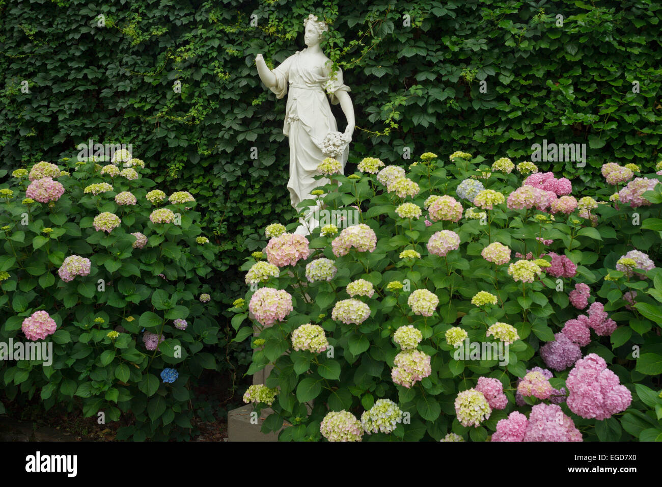 Hydrangea flowers and statue in the baroque garden, Palazzo Pfanner, Lucca, UNESCO World Heritage Site, Tuscany, - Stock Image