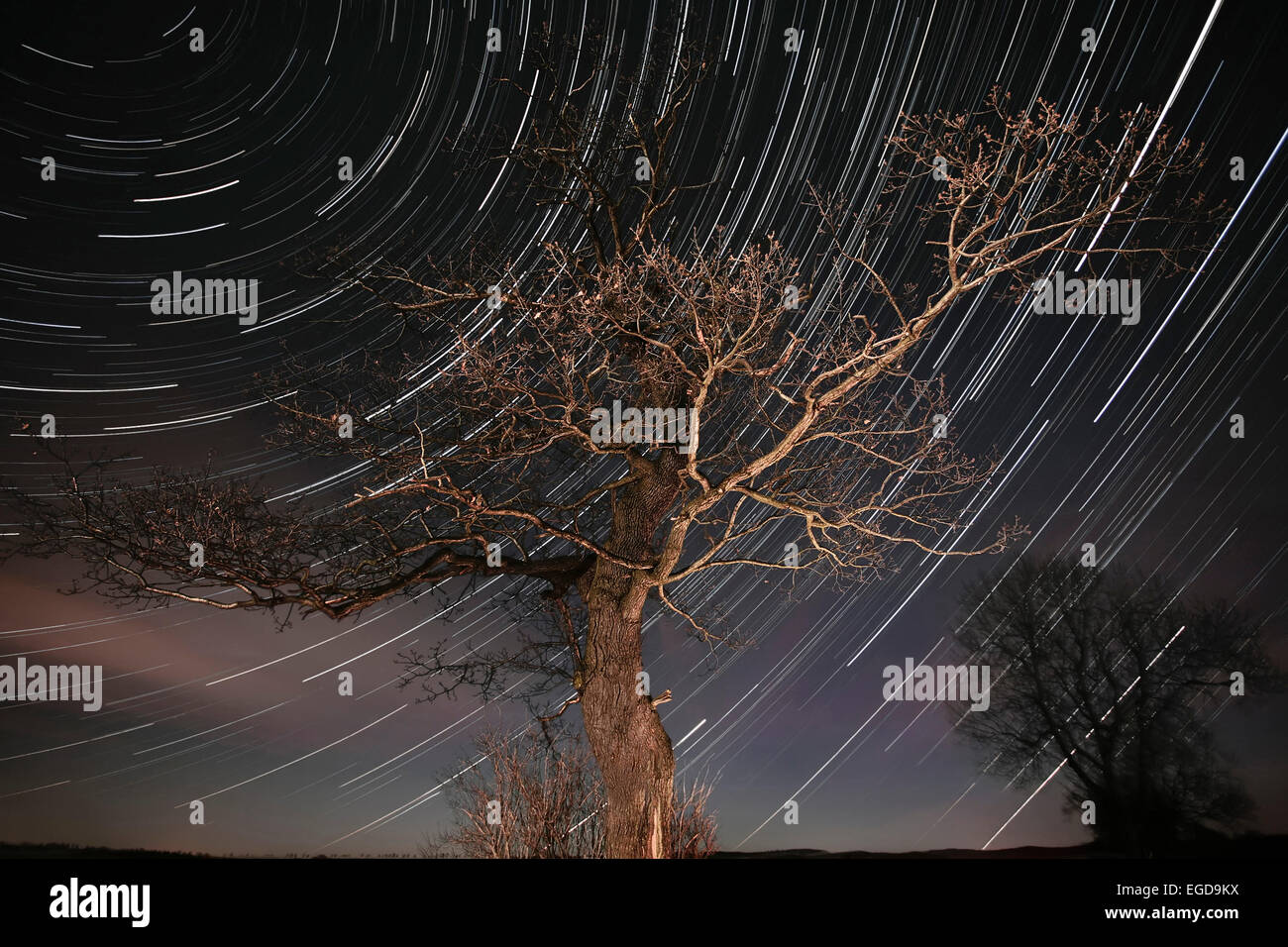 Star trails on a clear night with a mighty oak in foreground, Erzgebirge, Saxony, Germany - Stock Image