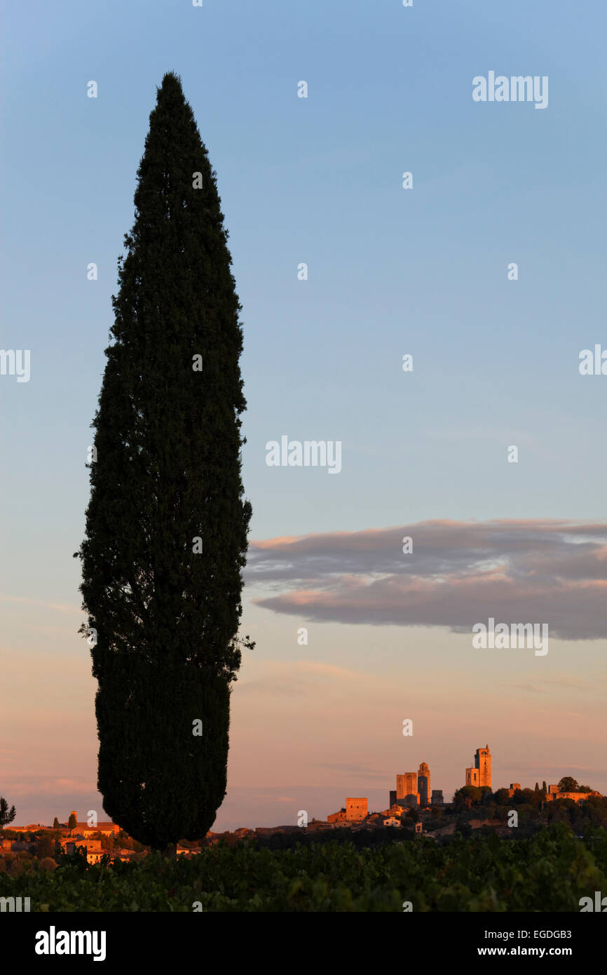 Cypress and some of the towers of San Gimignano, Tuscany, Italy - Stock Image