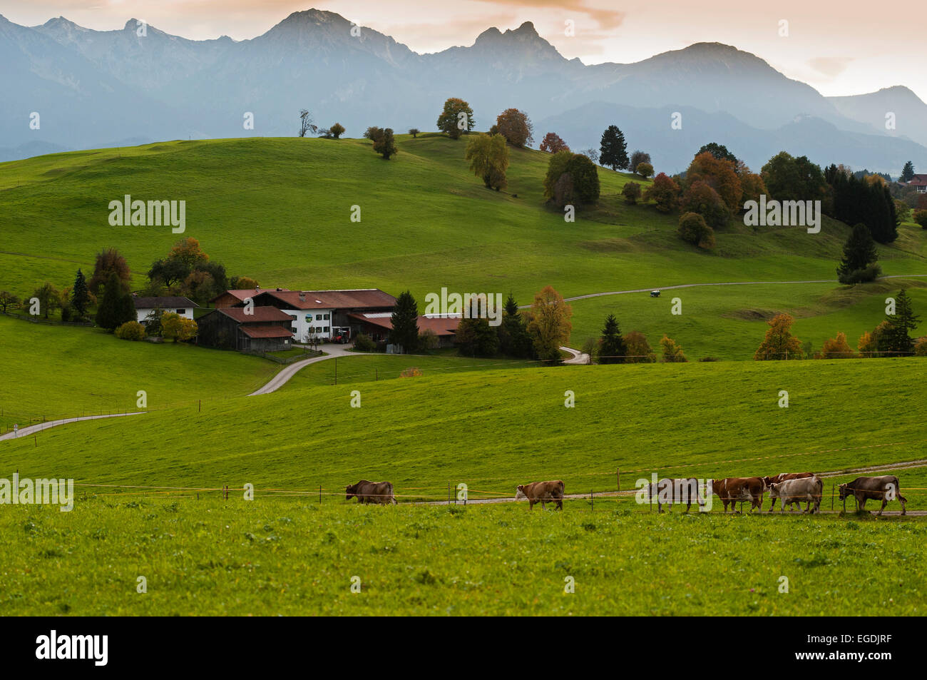 The foothills of the Alps near Steingaden, Upper Bavaria, Bavaria, Germany - Stock Image