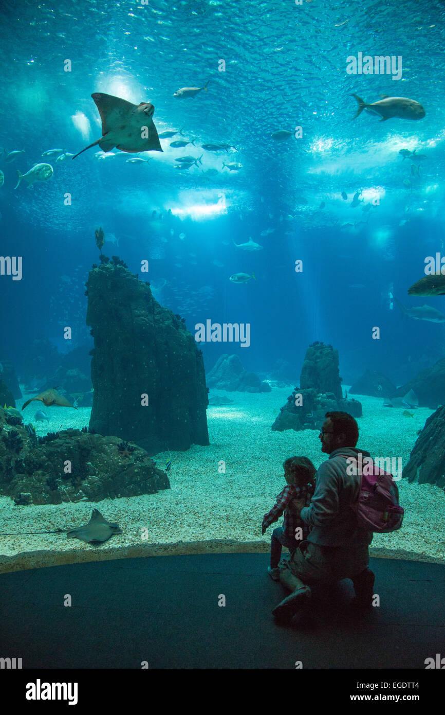 Father and daughter admiring stingrays and sharks in the giant tank of Oceanario de Lisboa aquarium at Parque das - Stock Image