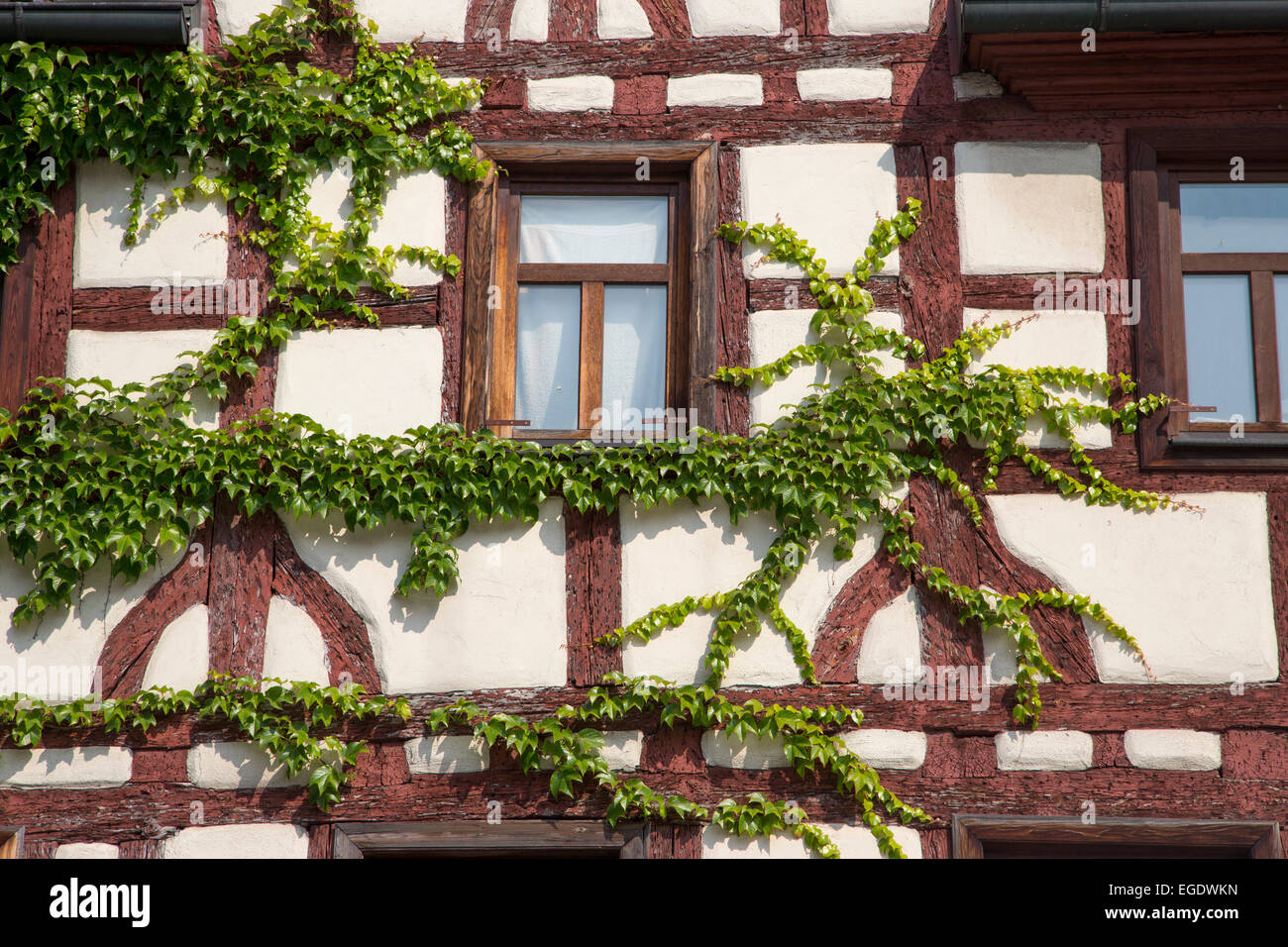 Timber frame house covered with ivy, Fuerth, Franconia, Bavaria, Germany - Stock Image