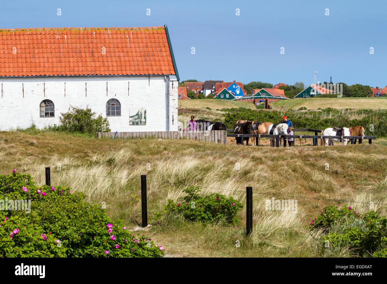 Horse Riding, stables on Spiekeroog Island, Nationalpark, North Sea, East Frisian Islands, East Frisia, Lower Saxony, - Stock Image