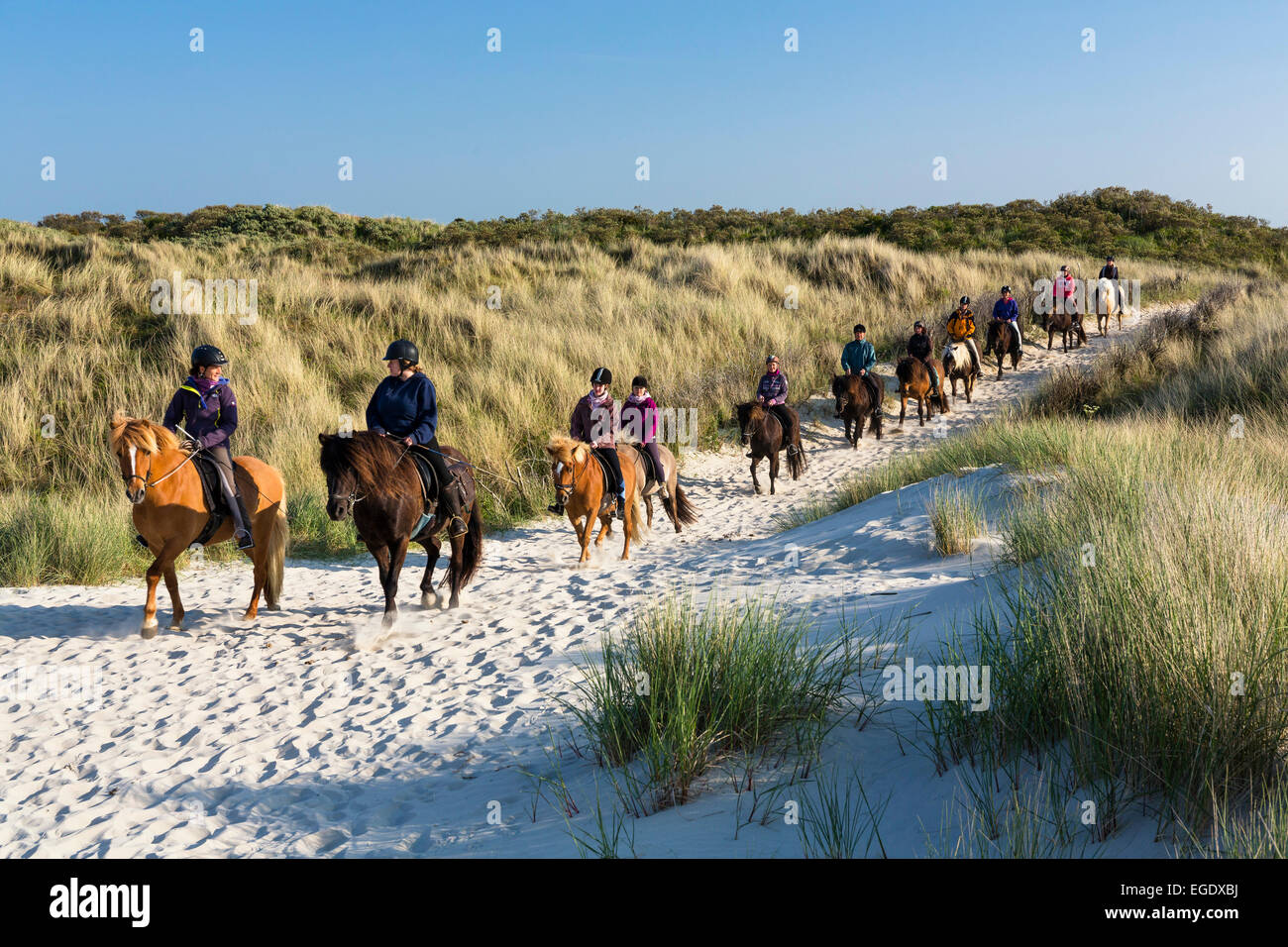 Horse riding in the dunes of Spiekeroog Island, Nationalpark, North Sea, East Frisian Islands, East Frisia, Lower - Stock Image