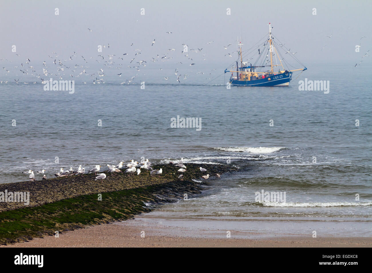 Fishing boat with gulls off Norderney Island, Nationalpark, North Sea, East Frisian Islands, East Frisia, Lower - Stock Image