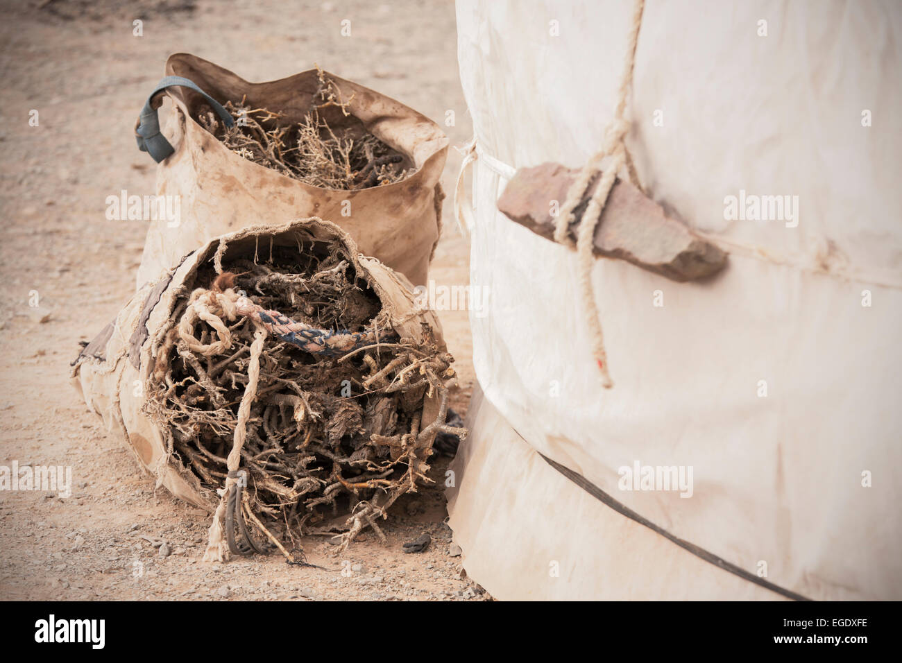 Firewood in bags by Ger, Omnogov, The Gobi, Mongolia - Stock Image