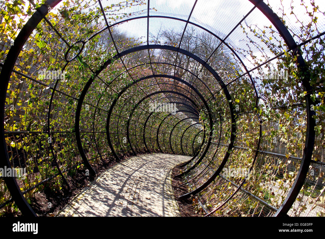 The Poison Ivy tunnel at Alnwick Gardens Stock Photo: 78983738 - Alamy