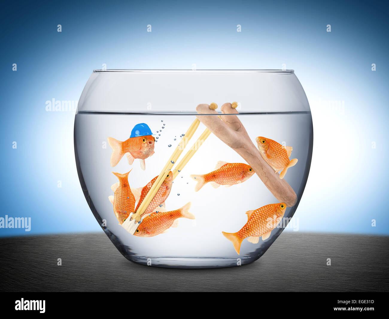 Fische mit Steinschleuder im Goldfischglas - Stock Image