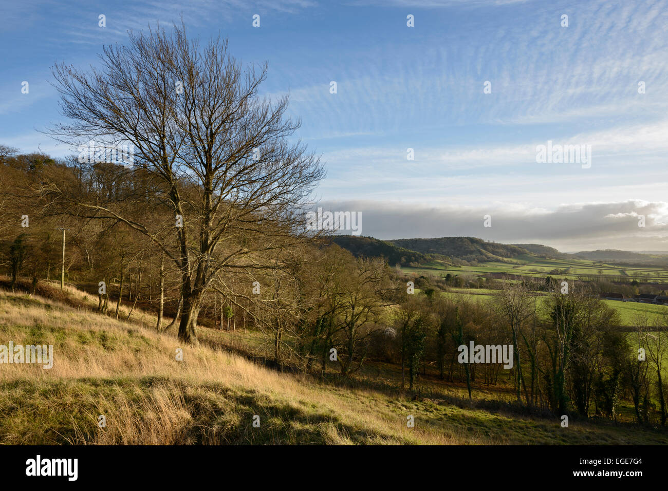 View towards Copley Wood from Collard Hill in the Polden Hills near Compton Dundon, Somerset. Stock Photo
