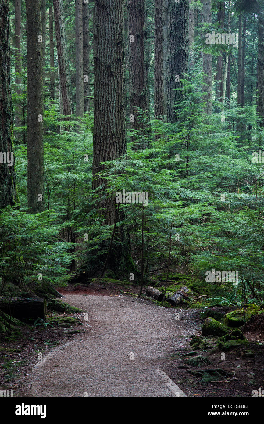 Hiking trail through a dense temperate rain forest near Vancouver, Canada Stock Photo