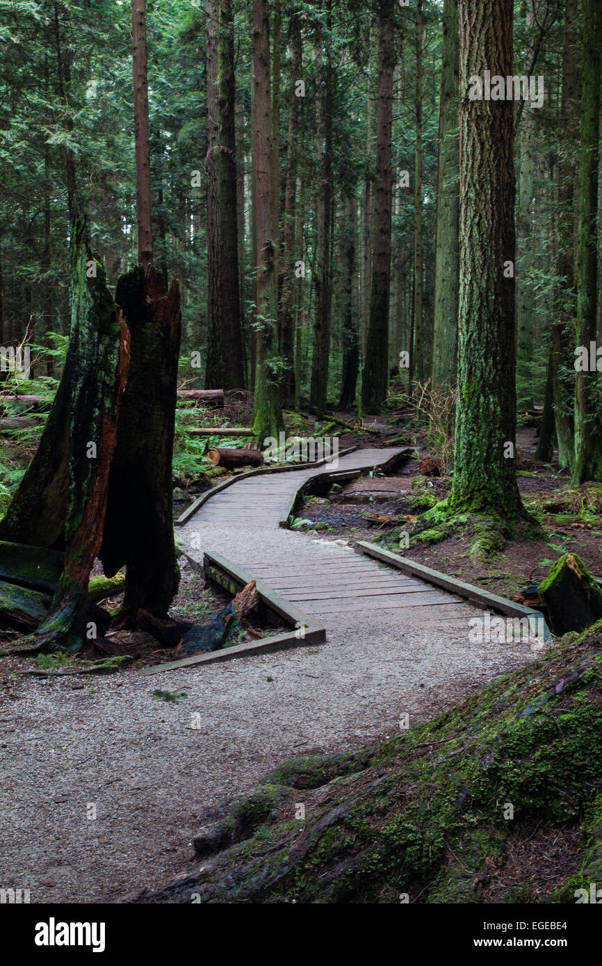 Elevated walkway through an environmentally sensitive area in a temperate rain forest Stock Photo