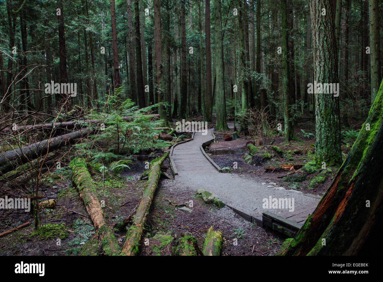 An elevated trail through a marshy area of a temperate rain forest near Vancouver Stock Photo