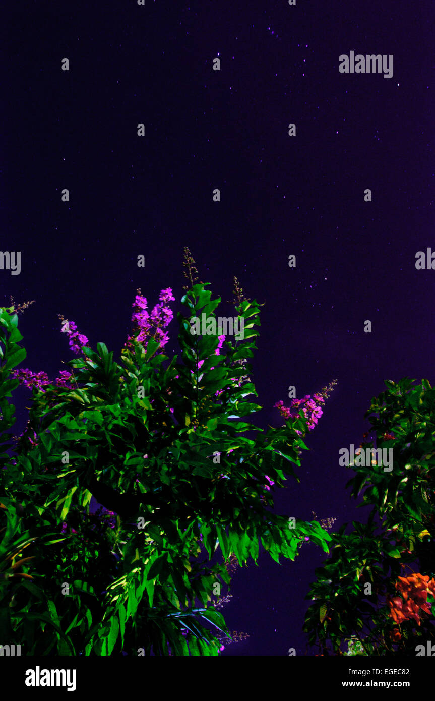 Heaven plants tree flowers stars night green spiral stock heaven plants tree flowers stars night green spiral landscape blue firmament orion nature life live beautiful izmirmasajfo