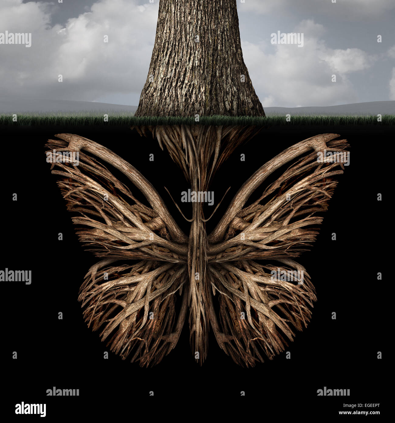Creative roots concept as a tree with a root shaped as a butterfly as a powerful environmental metaphor or symbol - Stock Image