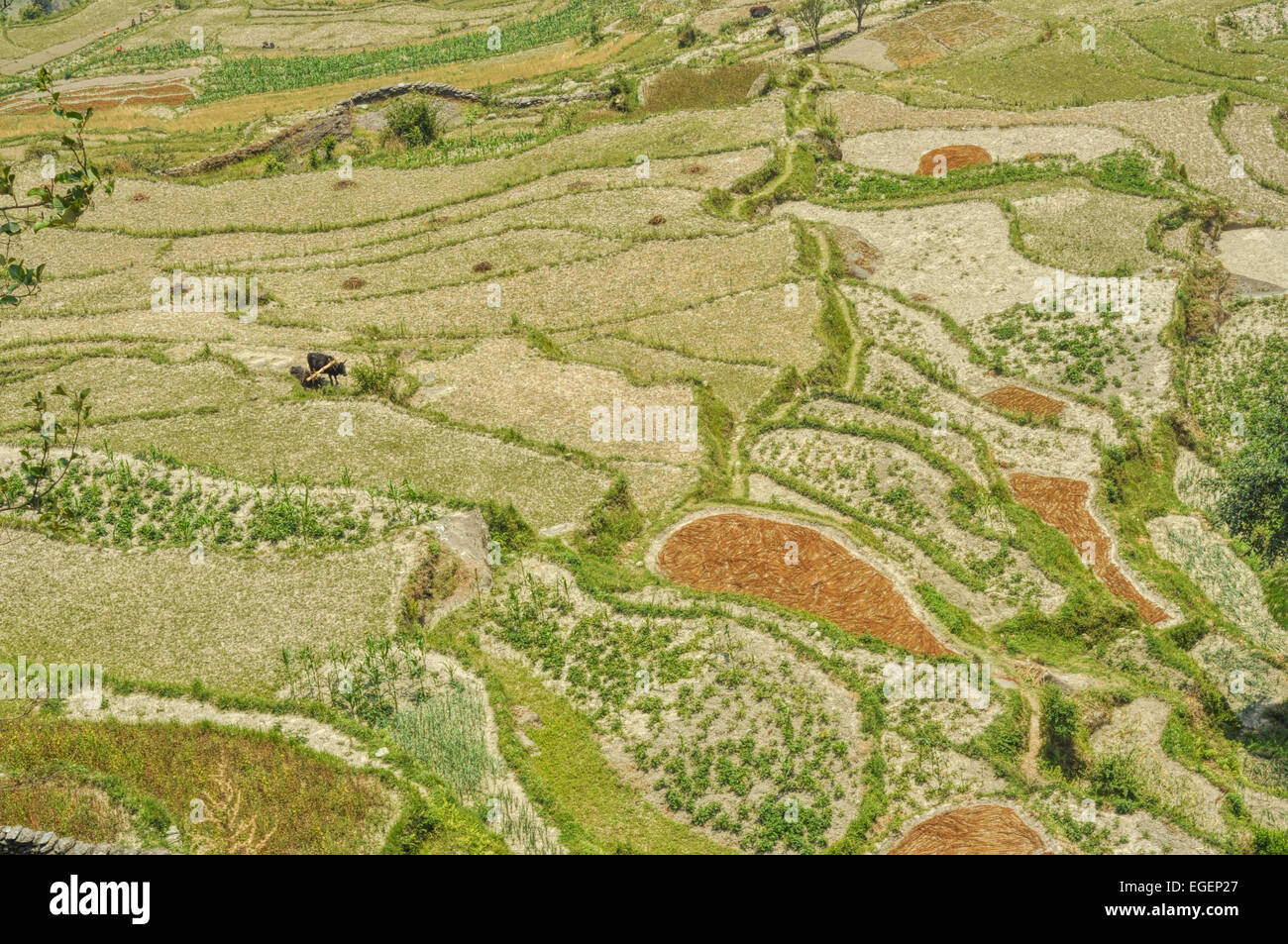 Amazing view of Nepalese terraced fields from above - Stock Image