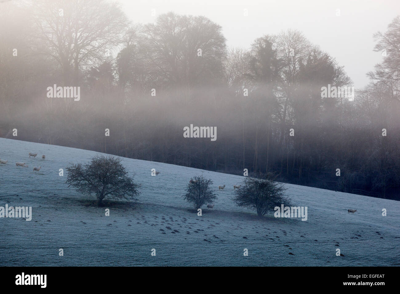 Winter trees with frost and mist, Stow-on-the-Wold, Cotswolds, Gloucestershire, England, United Kingdom, Europe Stock Photo