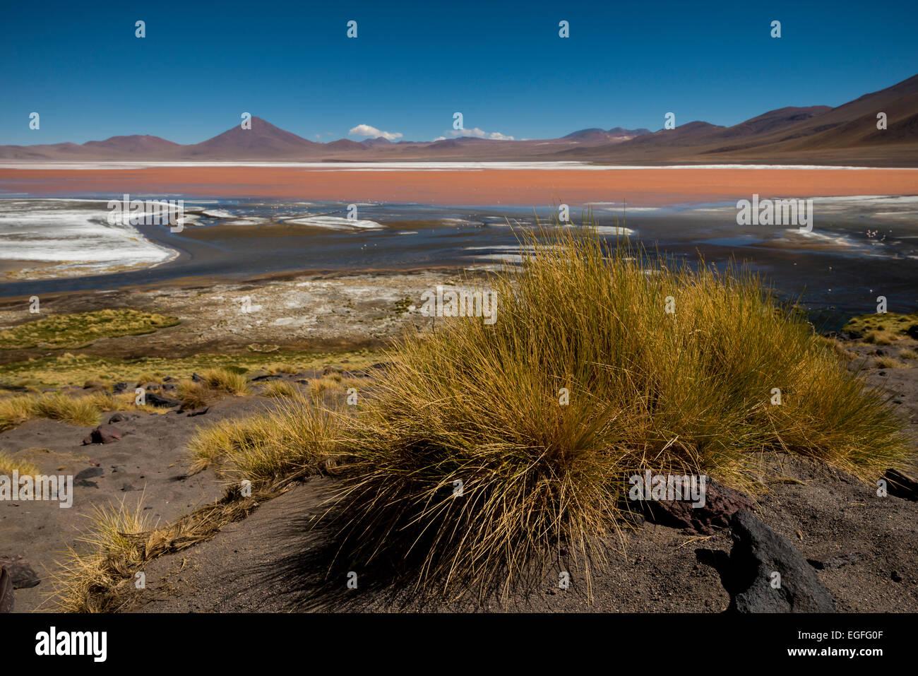 Laguna Colorada, Reserva Eduardo Avaroa, Bolivia - Stock Image