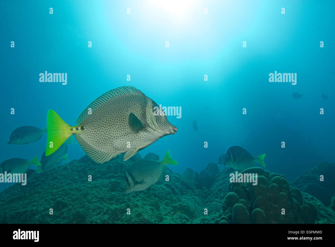 Tropical fish at Cabo San Lucas, Mexico Coral Reef Stock Photo