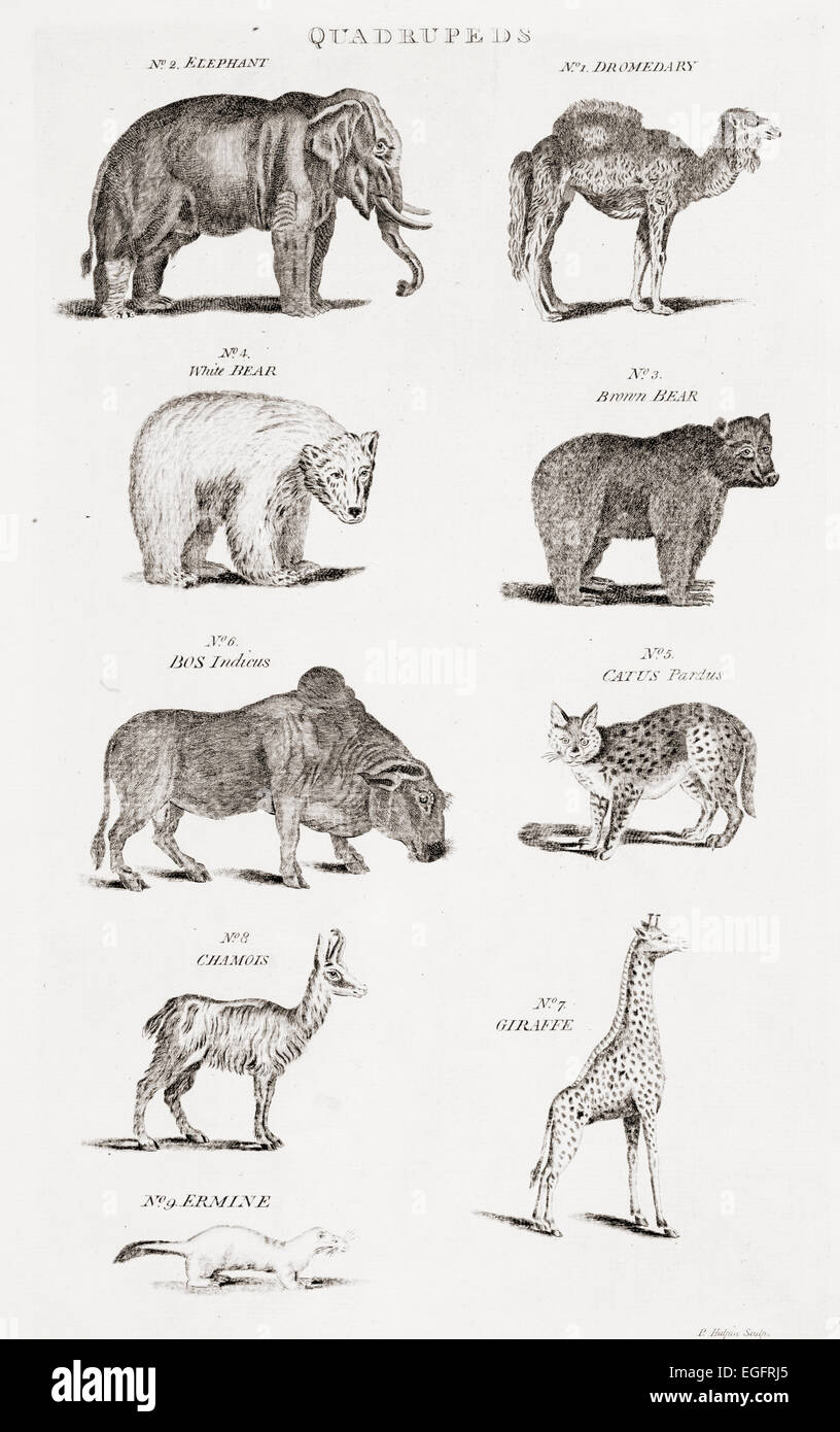 Different types of Quadrupeds.  From an 18th century print - Stock Image
