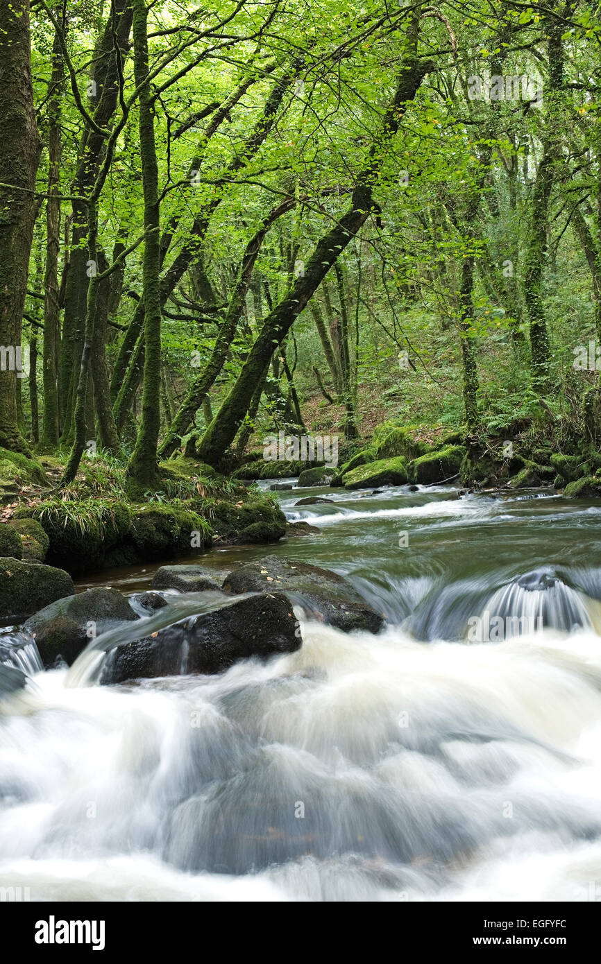 Waterfall Golitha Falls - On the southern edge of Bodmin Moor - Cornwall August - Stock Image