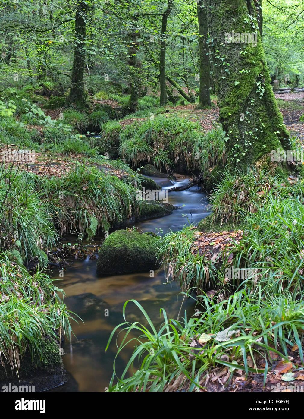 Golitha falls, Bodmin Moor, Cornwall - Woodland stream - Stock Image